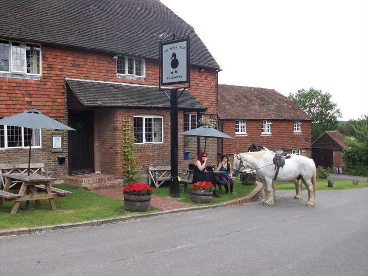 Horses & Dogs welcome at The Black Duck