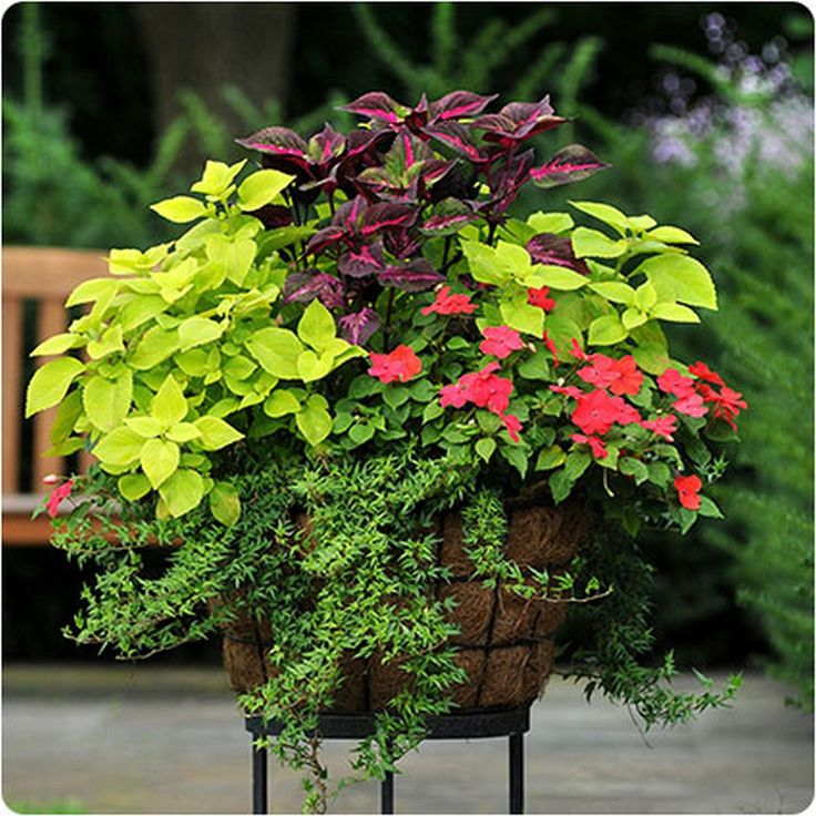Container Gardening Ideas For Summer: 558 Best CONTAINERS (Summer) Ideas From The Barn Nursery