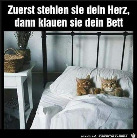 klauen dein Bett …..