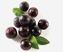 Асаи - ягода, чемпион по содержанию антиоксидантов, незаменимых жирных кислот и аминокислот, полезных для укрепления сердечно-сосудистой системы, обладает колоссальным очищающим и омолаживающим эффектом.
