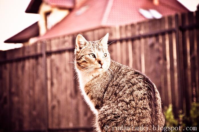 rudawianki.blogspot.com   The Cat :)