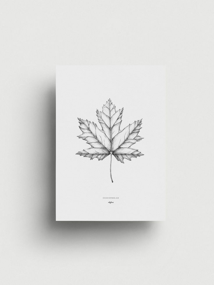 Hand drawn illustration of a maple leaf by inkylines. The maple leaf is the national symbol of Canada, but is also the symbol of wisdom, connection and unity.