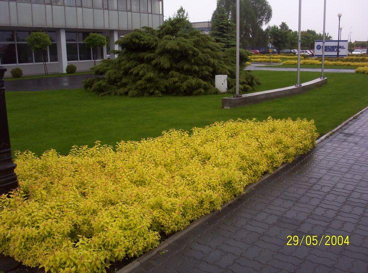 Landscape architecture garden. . PROJEKTOWANIE ZIELENI KIELCE- TERENY ZIELENI PRZY FIRMIE FEDERAL-MOGUL GORZYCE