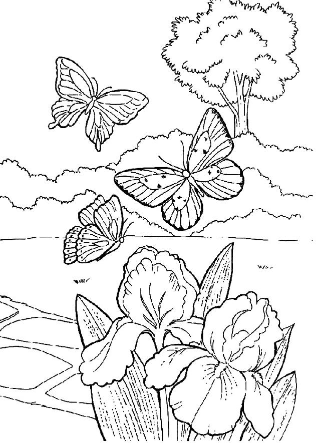 Garden Animals Coloring Pages : Beautiful butterfly in the garden coloring printable