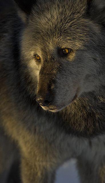 jordan  cement sale Wolf
