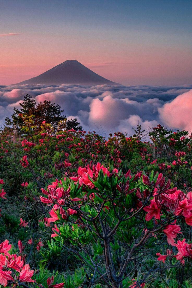 Sky garden Fuji Mountain Japan