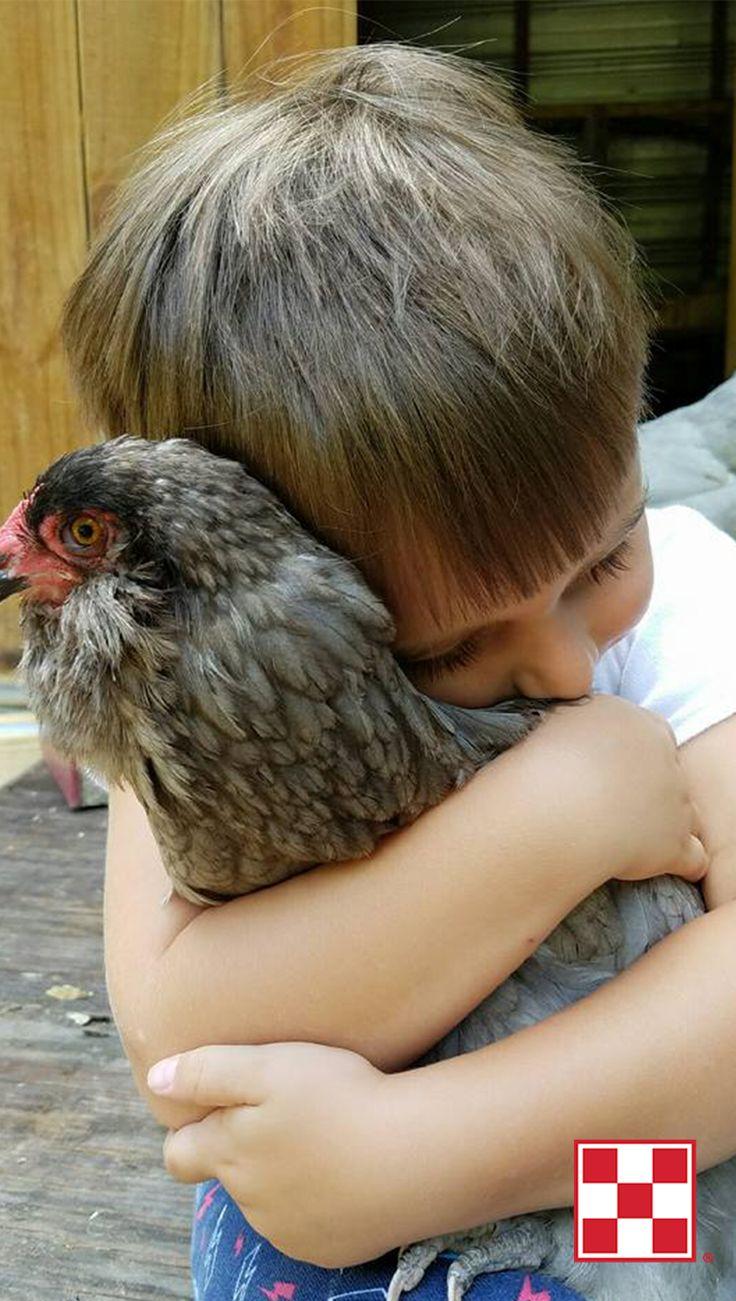 172 best kids u0026 chickens images on pinterest backyard chickens