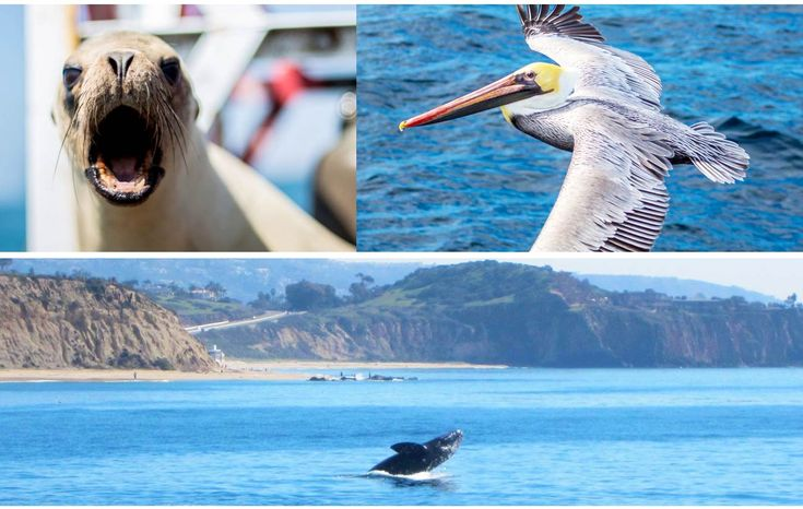 NEWPORT LANDING WHALE WATCHING - SOUTHERN CALIFORNIA WHALE WATCHING SCHOOL GROUP INFORMATION