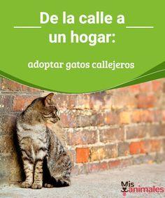 De la calle a un hogar: adoptar gatos callejeros ¿Has pensado aumentar tu familia con un animal? Te proponemos que lo hagas adoptando uno de los gatos callejeros que viven en tu ciudad, te contamos cómo. #hogar #adoptar #gatos #consejos