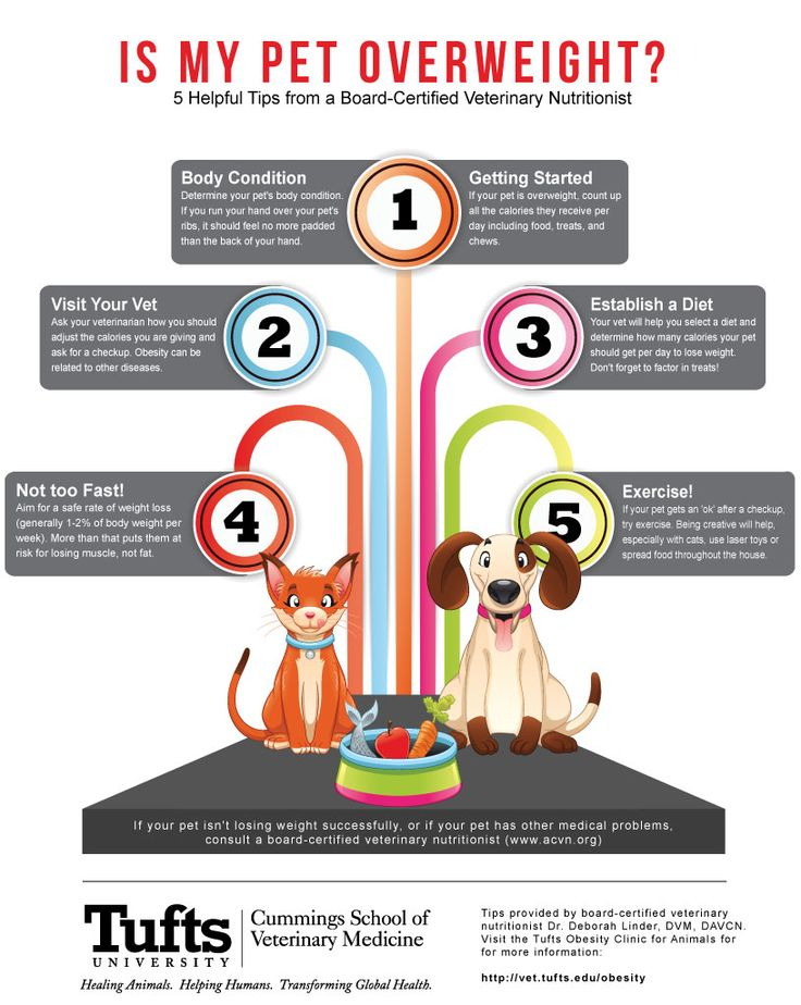 Is Your Pet Overweight? Check out tips from Tufts Obesity Clinic for Animals for Pet Obesity Awareness Day!