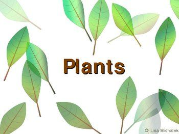 This PowerPoint contains 75 slides on the following topics Kingdom Plantae - Plants: Introduction to Plants, Multicellularity, Absorbing Nutrients, Symbiotic Relationships, Mycorrhizae, Preventing Water Loss, Cuticle, Stomata, Guard Cells, Reproducing on Land, Vascular Tissue, Seeds and Flowers, Advantages of Conducting Tissue, Advantages of Seeds, Seed Plants, Protection, Nourishment, Plant Dispersal, Growth, Advantages of Flowers, Plant Life Cycles, Alternation of Generations, $12.00