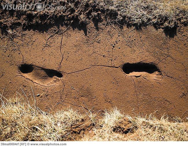 footprints in dirt
