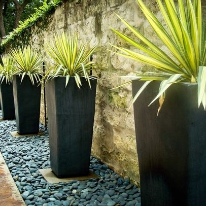 Tall planters against concrete wall with archeturial plants inside - river rocks with stepping stones strip against wall - add creeping fig to soften wall backdrop
