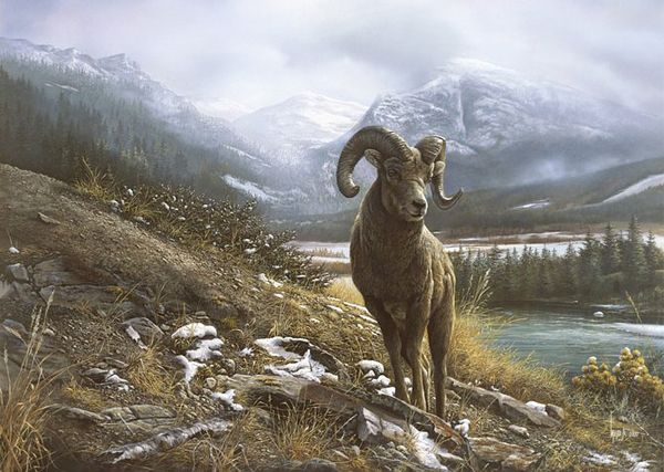 """Stunning Wildlife Paintings by Denis Mayer Jr. Vancouver, Canada. """"Heights Ahead"""""""