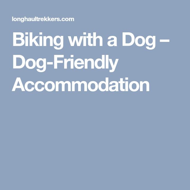 Biking with a Dog – Dog-Friendly Accommodation