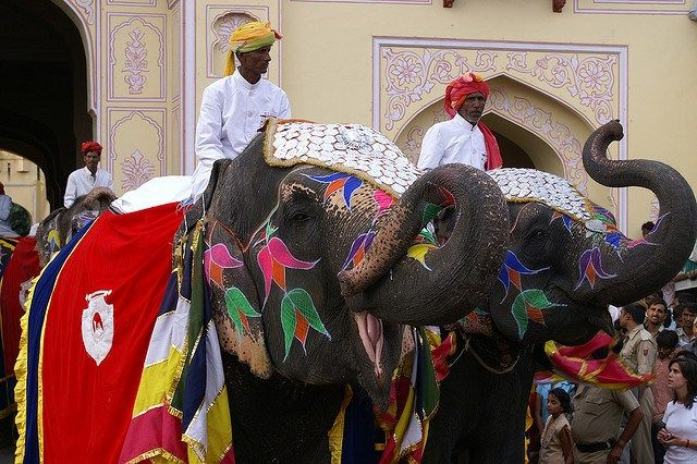 The beautifully decorated Elephants on the occasion of Teej Festival