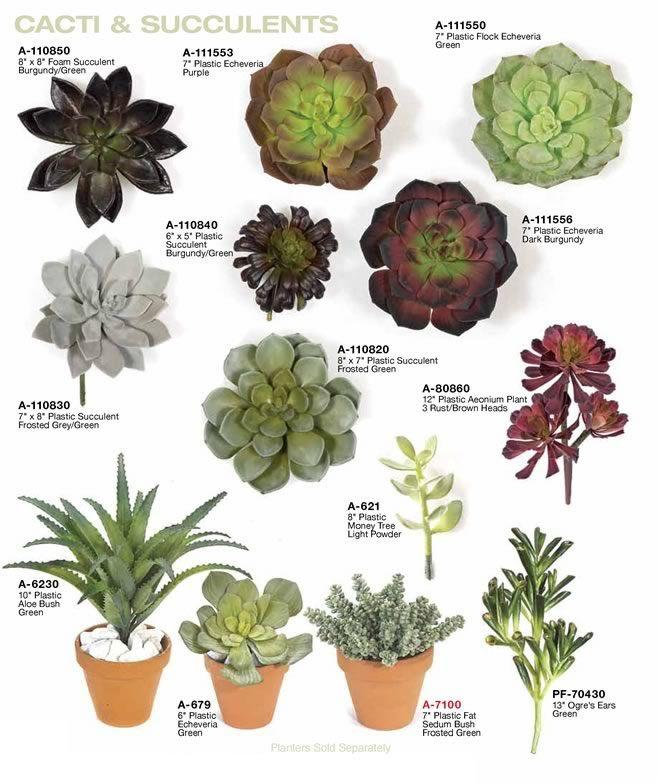 Succulent Types: 1. Fake Indoor Succulent Plants