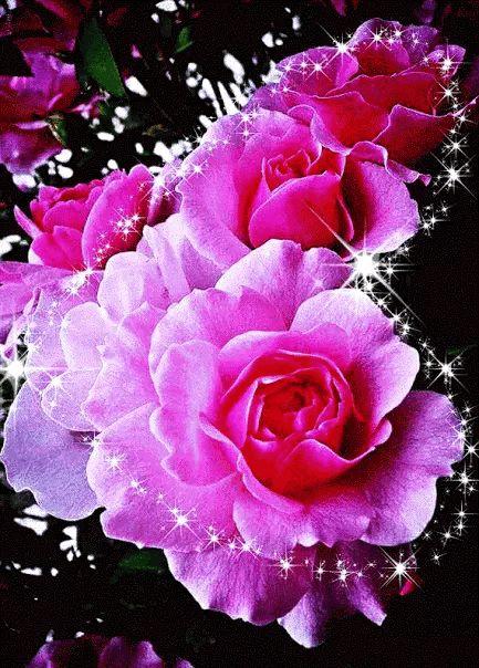 Открытка, картинки красивые живые цветы гифки