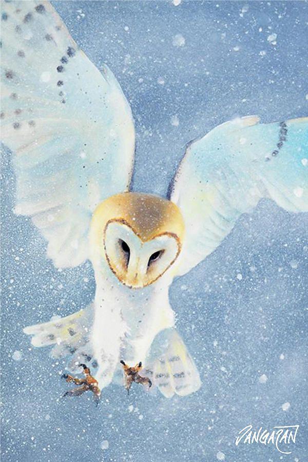 Owl Detail Painting  - Owl Detail Fine Art Print
