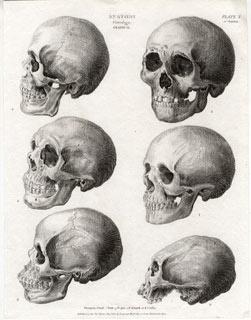 120 best morbid anatomy images on pinterest human anatomy anatomy anatomy chart skull anatomyskeleton ccuart Gallery