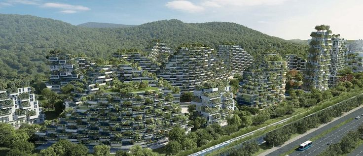 China's urban forest