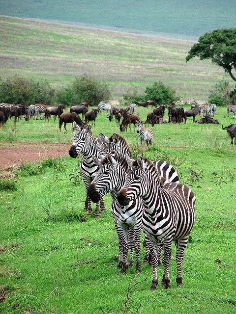 Serengeti National Park, Tanzania.  Photo: daniel.virella, via Flickr