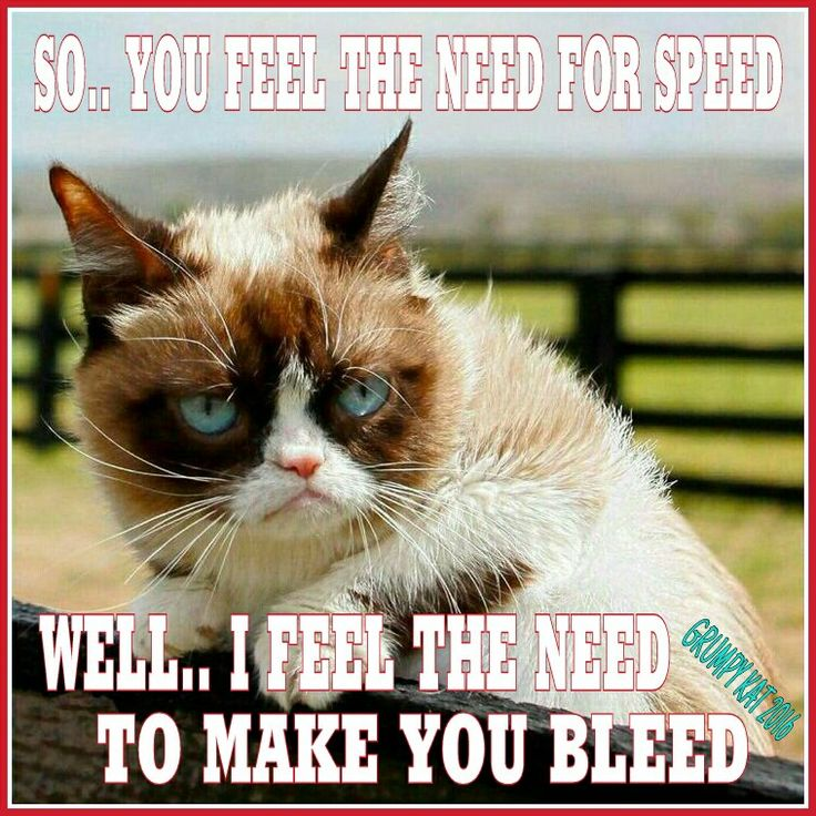 fe82ccddc4d499a5c89e56eb1f4ff688 cat jokes grumpy cat meme 104 best grumpy cat images on pinterest grumpy kitty, cats humor,Frowning Cat Meme