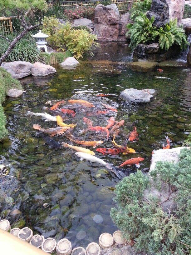 Koi fish pond - Japan Pavillion, Walt Disney World, Florida