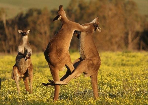 Australia!!! #australia australia