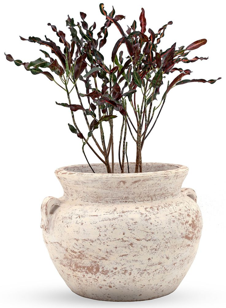 This large antique white chata pot is perfect for outdoor use. Try filling the pot with an orchid or a large floral arrangement.