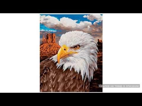 Раскраска по номерам Белоголовый орлан 24х30 Schipper (Шиппер)