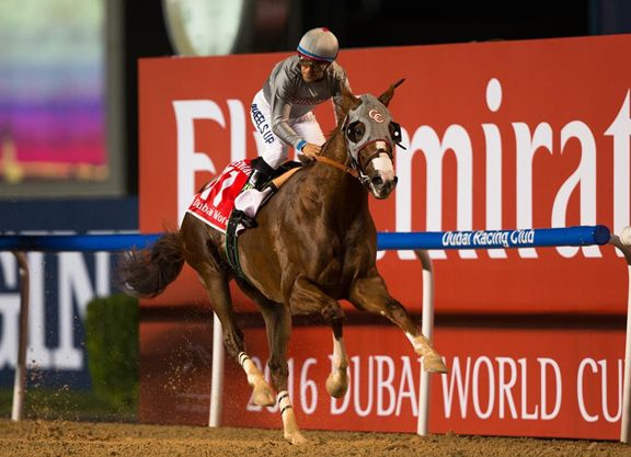 It will be no walkover for America's richest racehorse in his long-awaited return to the states, as the GII San Diego H. came up tougher than most could have imagined.  California Chrome (Lucky Pulpit), last seen …