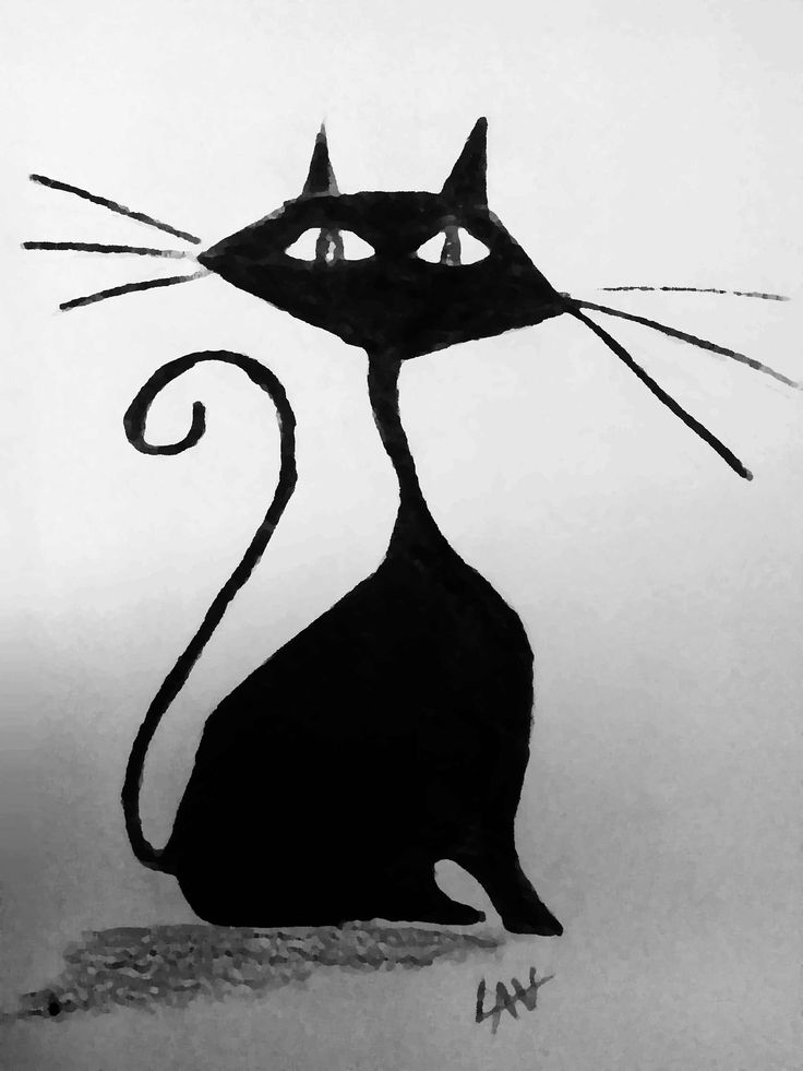 @lauraudiovisual Cat