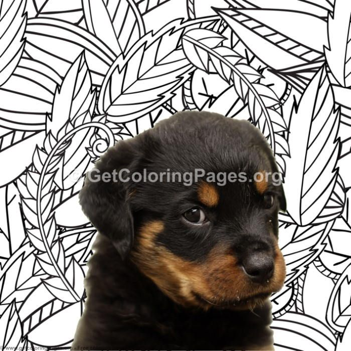 Rottweiler Coloring Pages Getcoloringpages Org Coloring Coloringbook Coloringpages Coloringbooks Dogs Coloring Pages Cool Art Doodle Art