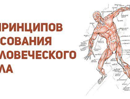 9 принципов рисования человеческого тела