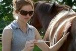 N.J. Horses Quarantined after Equine Herpesvirus Exposure