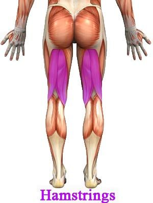 Best Hamstring Exercises for Women / Men - Hamstrings Leg Workout Tips: