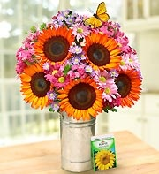 Red sunflowers make the water pink: 1 800 Flower, Amazing Flower, Good Ideas, Red Sunflowers, Free Gift, Golden Sunsets, Parties Ideas, Beautiful Sunflowers, Beautiful Bouquets