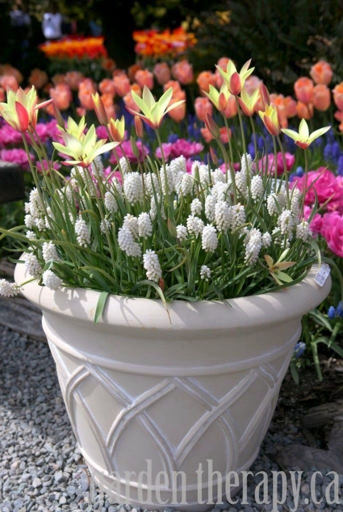 Spring flower pot ideas: this one is from gardentherapy.ca