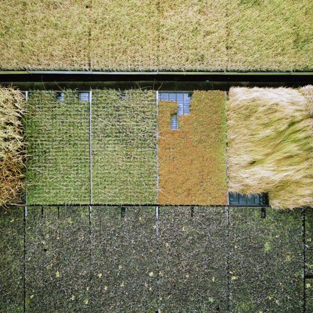Gerco de Ruijter 2008-2011 - Untitled 2011