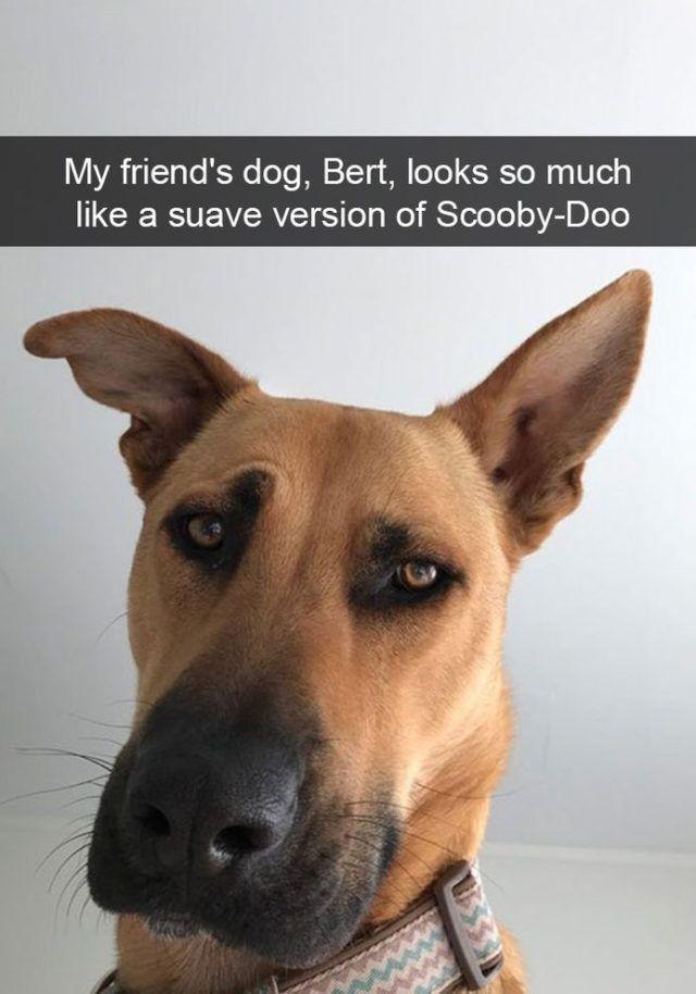 Dog Meme Funny Dog Photos Dog Snapchats Funny Animals