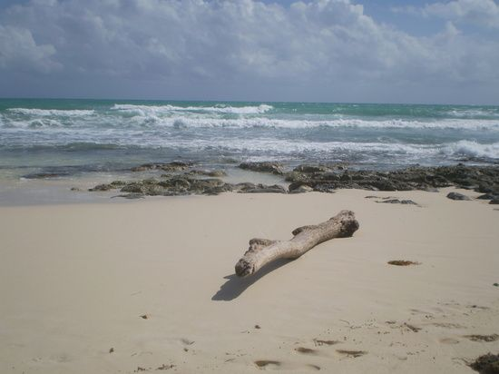 DRIFTWOOD by catherinea