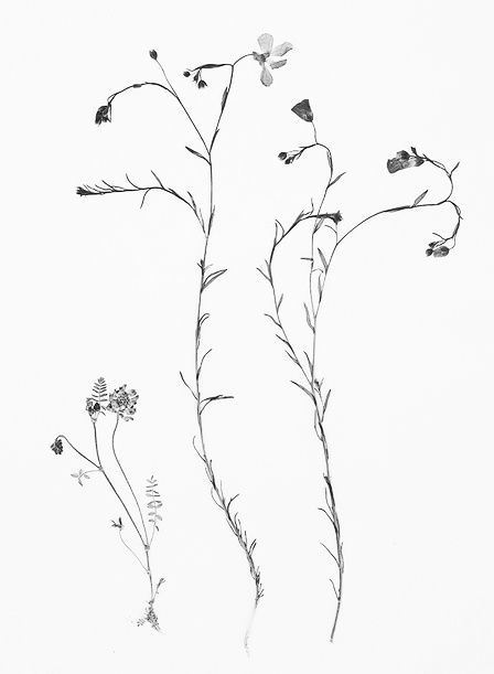 Wildflower Line Drawing : Wildflowers drawing google search art pinterest