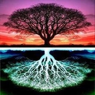 tree of life: Life Reflections, Inspiration, Nature, Old Trees, Bing Images, Mothers Earth, Roots, Trees Of Life, Photography
