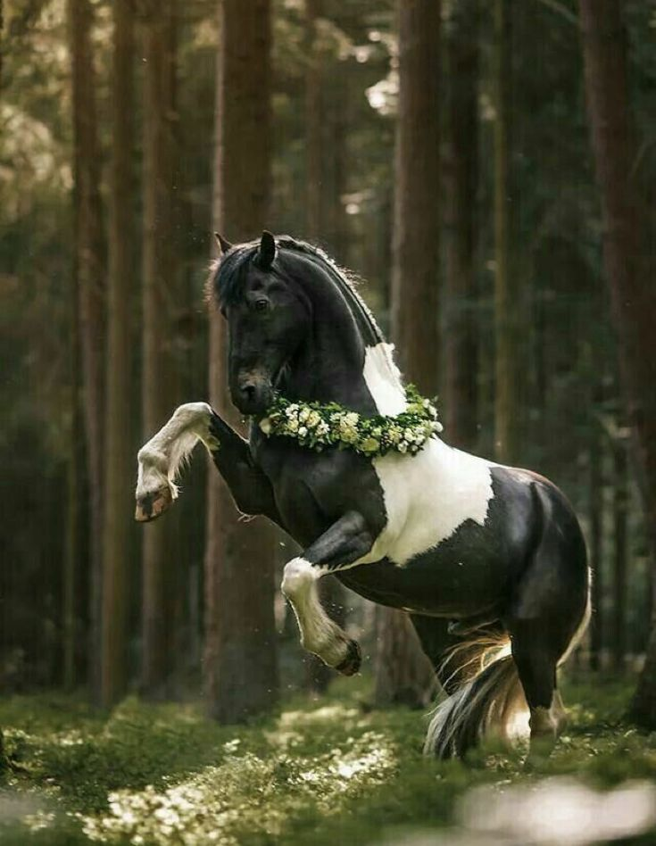 первый живые картинки с лошадью ему сразу гонорар