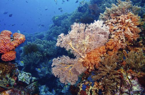 Colorful Underwater Of Bunaken Marine Park