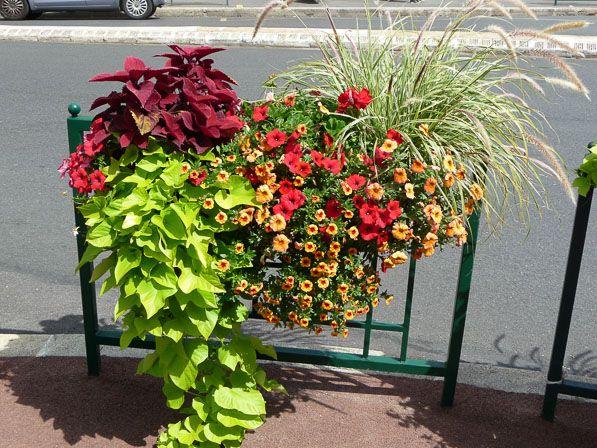 les 25 meilleures id es concernant jardini res d 39 t sur pinterest fleurs en pots jardin de. Black Bedroom Furniture Sets. Home Design Ideas