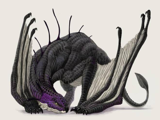 有毒の飛竜