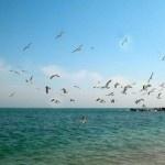 Yantai, #China – #Travel Guide http://tourtellus.com/2012/08/yantai-china-travel-guide/