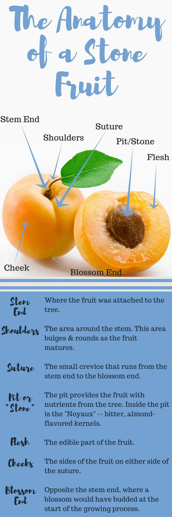 The Anatomy of a Stone Fruit